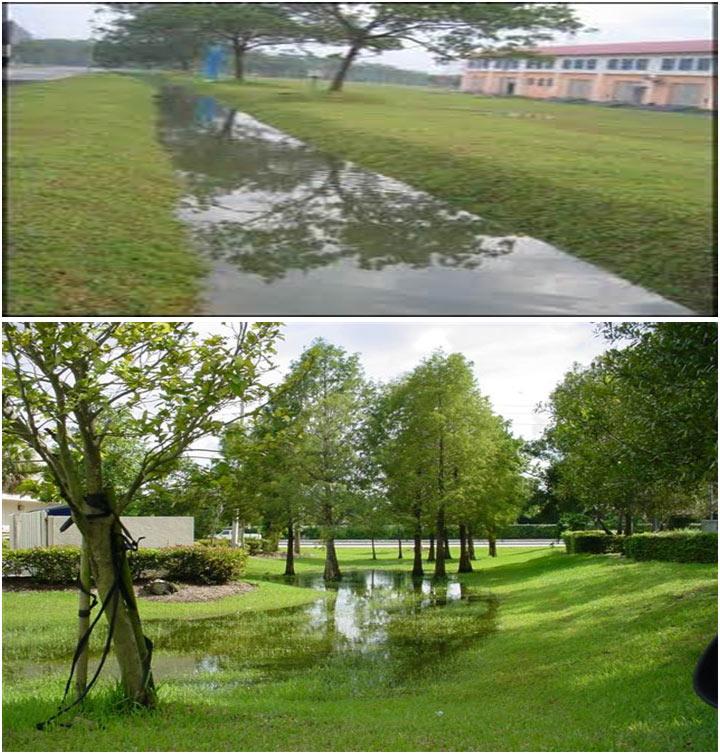 Wet Biofiltration Swale